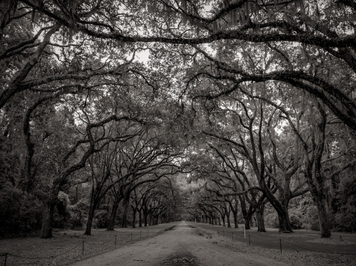 Wormsloe in B&W