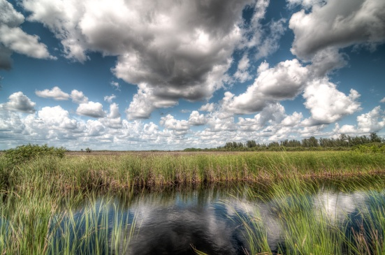 Clouds Over the Everglades