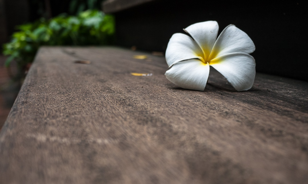 Plumeria on Step Thailand