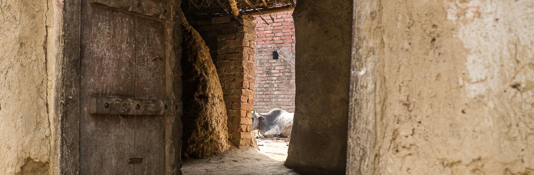 Framed Rural India