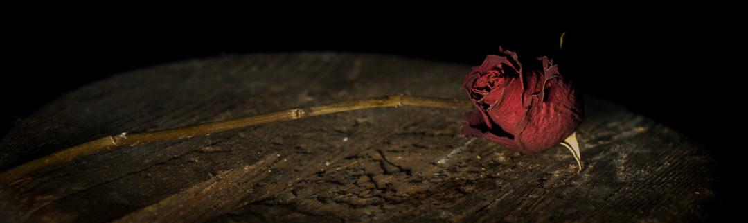 Stille Life Roses