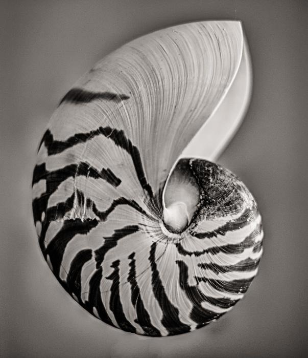 The Chambered Nautlus