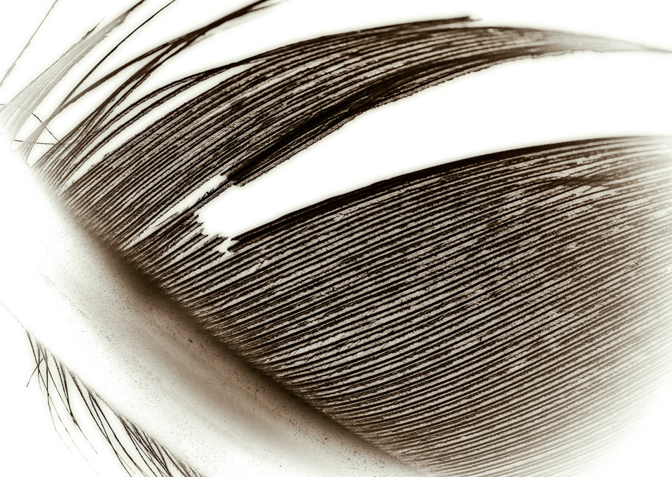 Lines of a Feather