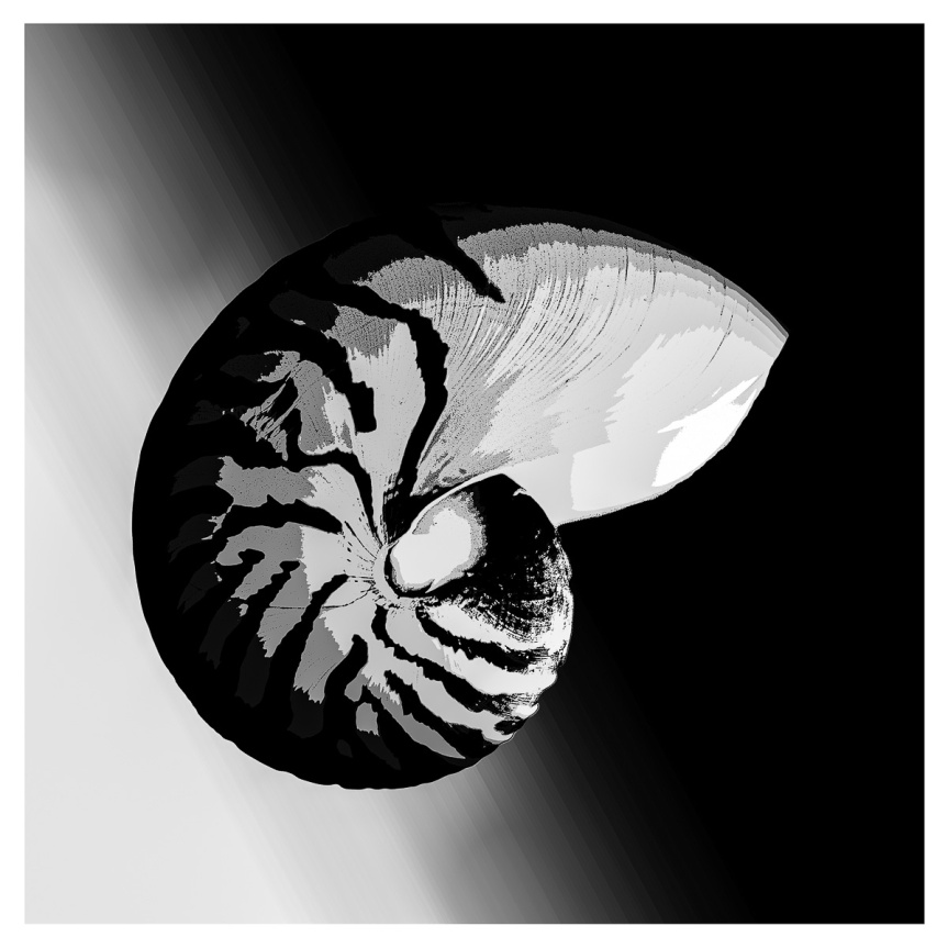 Chambered Nautilus Graphic