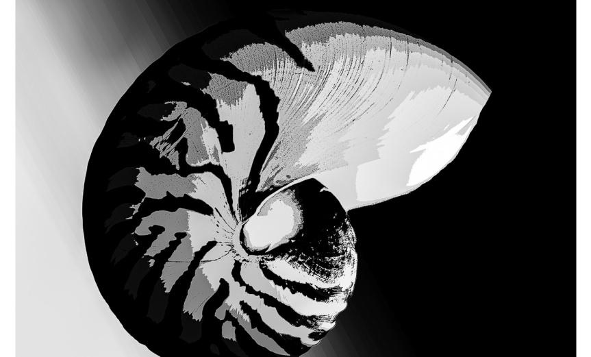 Chambered Nautilus Graphic